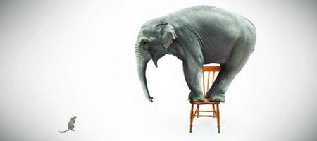 er elefanter bange for mus